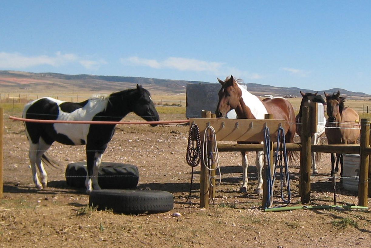 Horseboarding services, Laramie WY call 307-757-5378